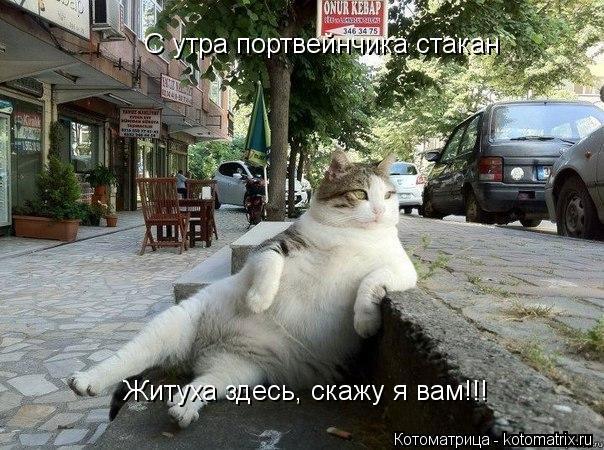 Котоматрица: С утра портвейнчика стакан С утра портвейнчика стакан Житуха здесь, скажу я вам!!!