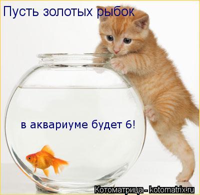 Котоматрица: Пусть золотых рыбок  в аквариуме будет 6!