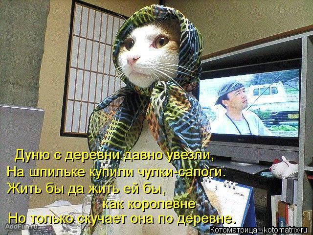 Котоматрица: Дуню с деревни давно увезли, На шпильке купили чулки-сапоги. Жить бы да жить ей бы, как королевне Но только скучает она по деревне.