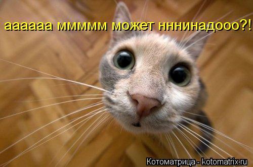 Котоматрица: аааааа ммммм может нннинадооо?!