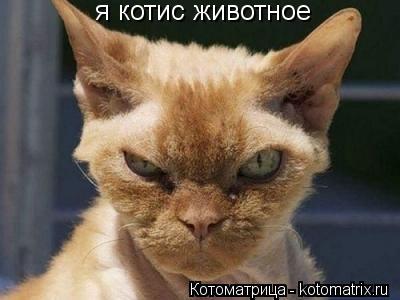 Котоматрица: я котис животное