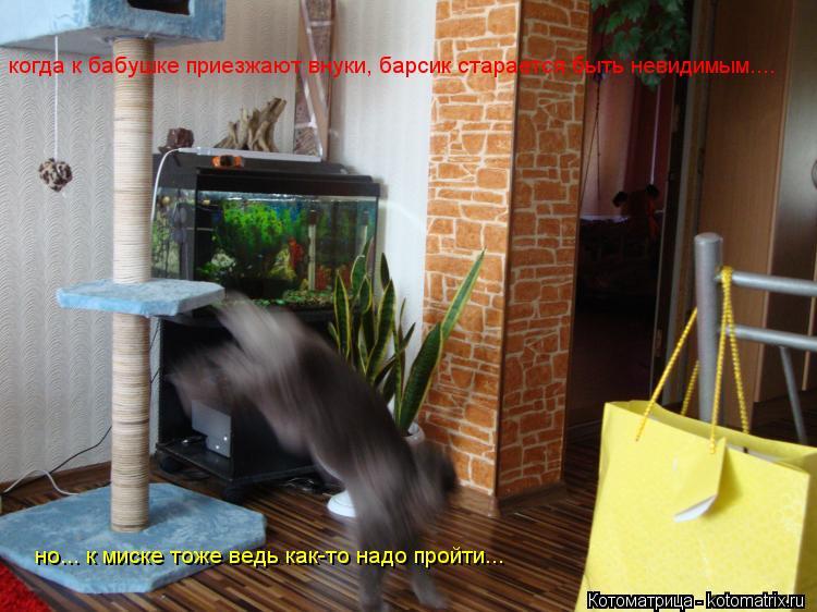 Котоматрица: когда к бабушке приезжают внуки, барсик старается быть невидимым.... но... к миске тоже ведь как-то надо пройти...