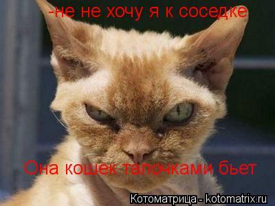 Котоматрица: -не не хочу я к соседке Она кошек тапочками бьет