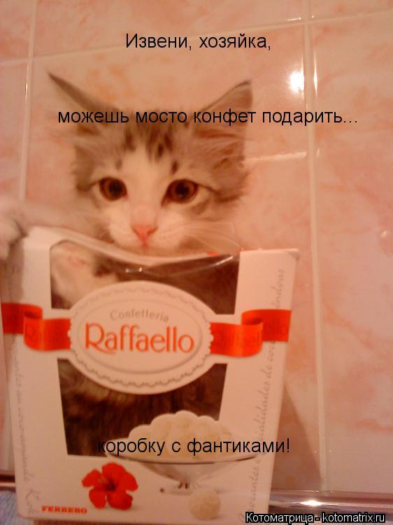 Котоматрица: Извени, хозяйка,  можешь мосто конфет подарить... коробку с фантиками!