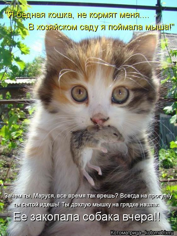 """Котоматрица: """"Я-бедная кошка, не кормят меня.... В хозяйском саду я поймала мыша!"""" Ее закопала собака вчера!! Зачем ты, Маруся, все время так врешь? Всегда на"""