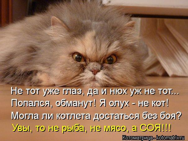 Котоматрица: Не тот уже глаз, да и нюх уж не тот... Попался, обманут! Я олух - не кот! Могла ли котлета достаться без боя? Увы, то не рыба, не мясо, а СОЯ!!!