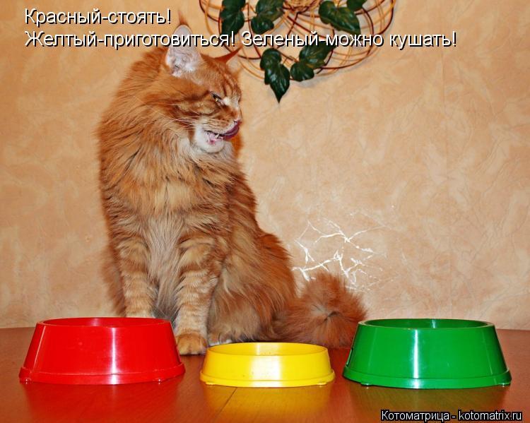Котоматрица: Красный-стоять! Желтый-приготовиться! Зеленый-можно кушать!