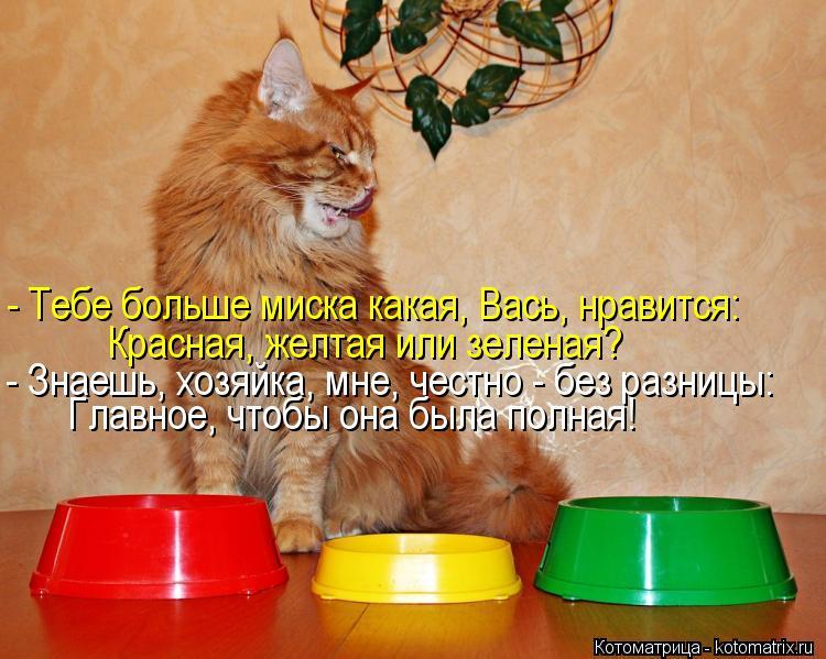 Котоматрица: - Тебе больше миска какая, Вась, нравится: Красная, желтая или зеленая? - Знаешь, хозяйка, мне, честно - без разницы: Главное, чтобы она была пол