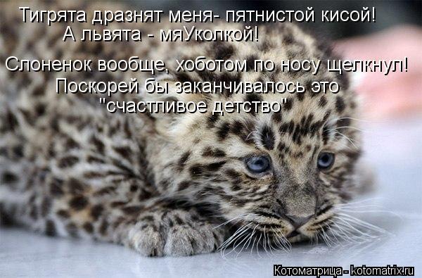"""Котоматрица: Тигрята дразнят меня- пятнистой кисой! А львята - мяУколкой! Слоненок вообще, хоботом по носу щелкнул! Поскорей бы заканчивалось это """"счастл"""