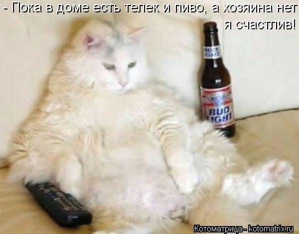 Котоматрица: - Пока в доме есть телек и пиво, а хозяина нет я счастлив!