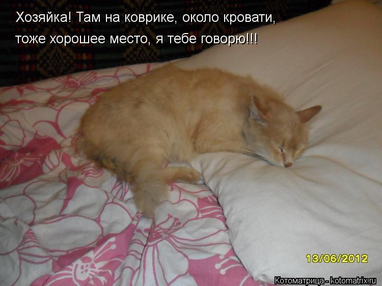 Котоматрица: Хозяйка! Там на коврике, около кровати, тоже хорошее место, я тебе говорю!!!