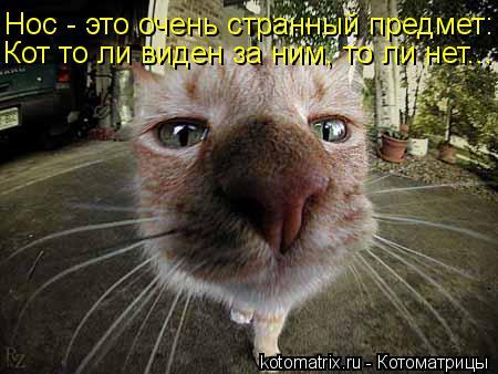 Котоматрица: Нос - это очень странный предмет: Кот то ли виден за ним, то ли нет...