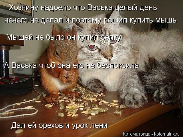 Котоматрица: Хозяину надоело что Васька целый день  нечего не делал и поэтому решил купить мышь Мышей не было он купил белку А Васька чтоб она его не бесп