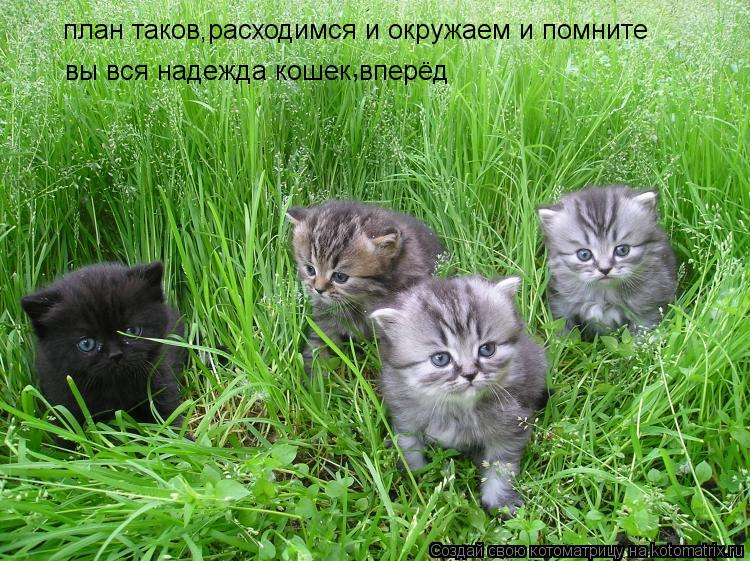 Котоматрица: план таков,расходимся и окружаем и помните , вы вся надежда кошек вперёд