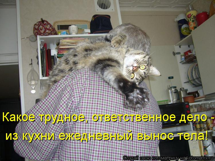 Котоматрица: Какое трудное, ответственное дело - из кухни ежедневный вынос тела!
