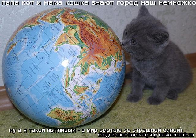 Котоматрица: папа кот и мама кошка знают город наш немножко  ну а я такой пытливый - в мир смотрю со страшной силой)