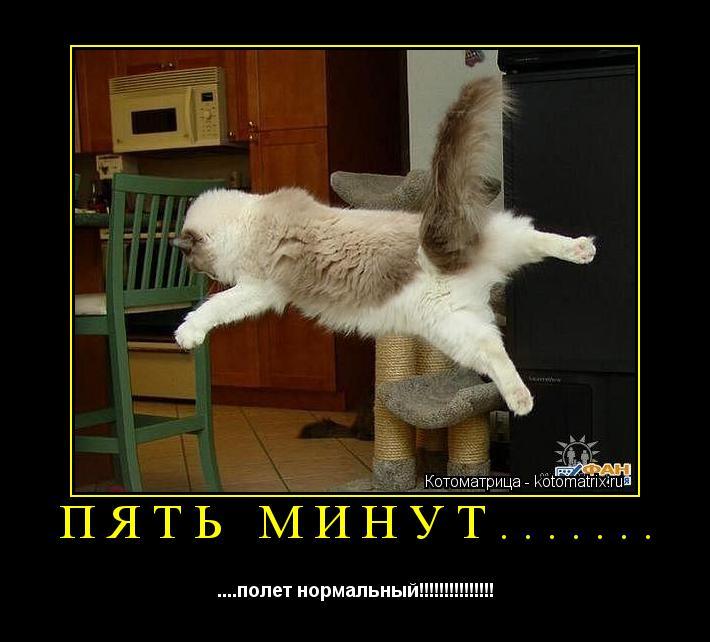 Котоматрица: ПЯТЬ МИНУТ....... ....полет нормальный!!!!!!!!!!!!!!!