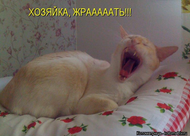 Котоматрица: ХОЗЯЙКА, ЖРАААААТЬ!!!