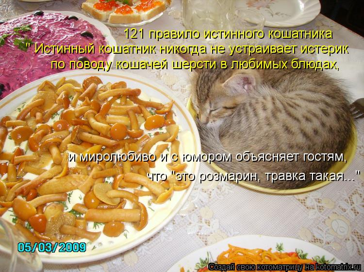 """Котоматрица: 121 правило истинного кошатника """" Истинный кошатник никогда не устраивает истерик по поводу кошачей шерсти в любимых блюдах, и миролюбиво и"""