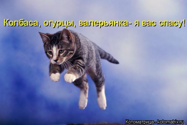 Котоматрица: Колбаса, огурцы, валерьянка- я вас спасу!