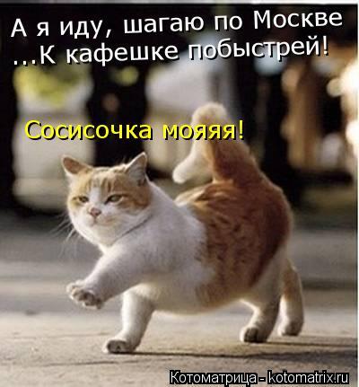Котоматрица: А я иду, шагаю по Москве ...К кафешке побыстрей! Сосисочка мояяя!