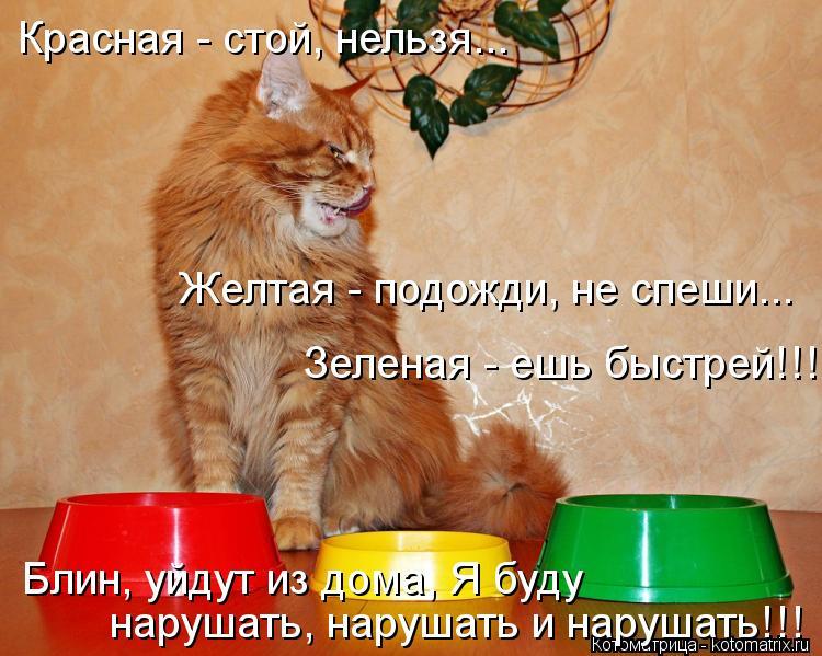 Котоматрица: Красная - стой, нельзя... Желтая - подожди, не спеши... Зеленая - ешь быстрей!!! Блин, уйдут из дома, Я буду  нарушать, нарушать и нарушать!!!