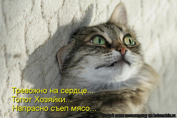 Котоматрица: Тревожно на сердце... Топот Хозяйки... Напрасно съел мясо...