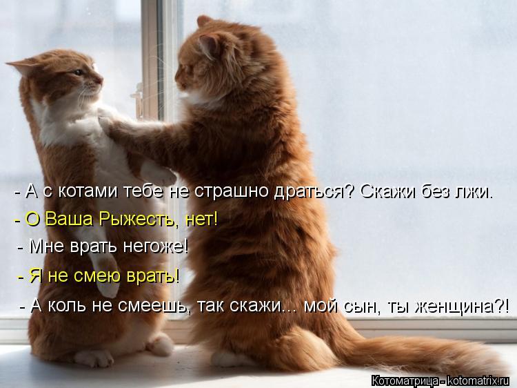 Котоматрица: - А с котами тебе не страшно драться? Скажи без лжи. - О Ваша Рыжесть, нет! - Мне врать негоже! - Я не смею врать! - А коль не смеешь, так скажи... мой
