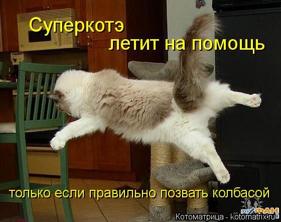 Котоматрица: Суперкотэ летит на помощь только если правильно позвать колбасой