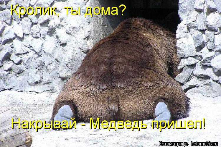 Котоматрица: Кролик, ты дома? Накрывай - Медведь пришел!