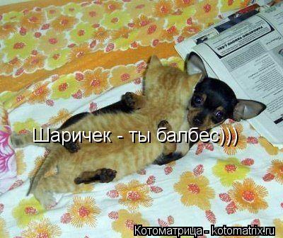 Котоматрица: Шаричек - ты балбес)))