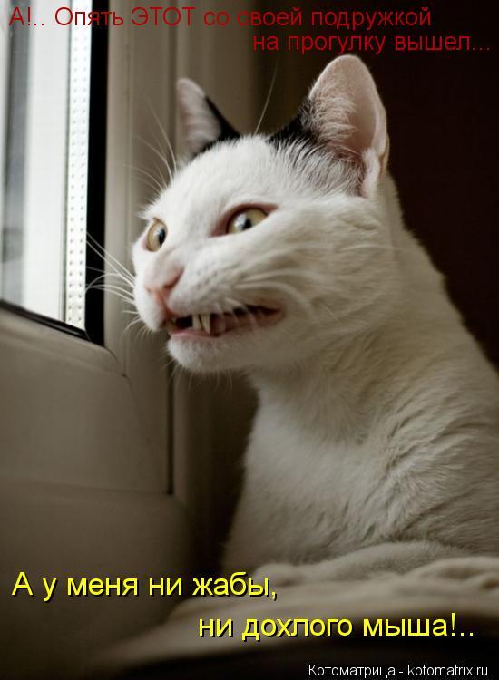 Котоматрица: А!.. Опять ЭТОТ со своей подружкой  на прогулку вышел...  А у меня ни жабы,  ни дохлого мыша!..