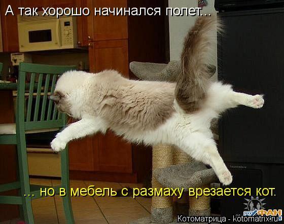 Котоматрица: А так хорошо начинался полет...  ... но в мебель с размаху врезается кот.