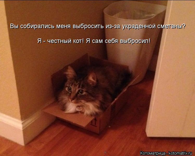 Котоматрица: Вы собирались меня выбросить из-за украденной сметаны? Я - честный кот! Я сам себя выбросил!
