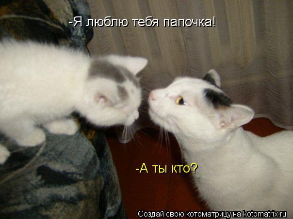 Котоматрица: -Я люблю тебя папочка! -А ты кто?