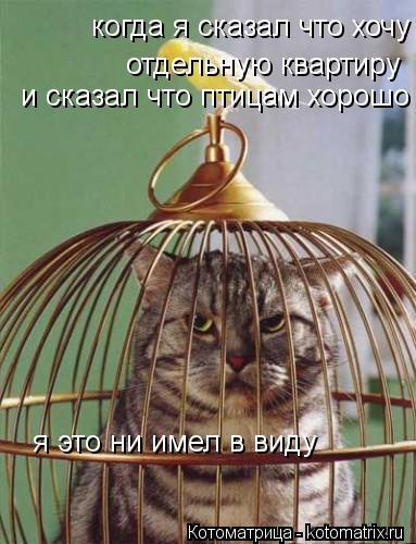 Котоматрица: когда я сказал что хочу отдельную квартиру отдельную квартиру и сказал что птицам хорошо я это ни имел в виду