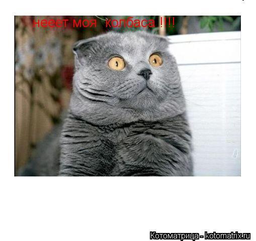 Котоматрица: нееет моя  колбаса !!!!