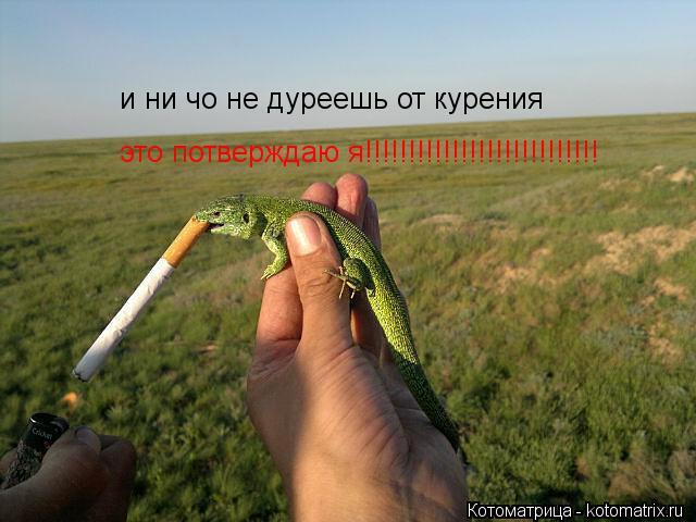 Котоматрица: и ни чо не дуреешь от курения это потверждаю я!!!!!!!!!!!!!!!!!!!!!!!!!!!