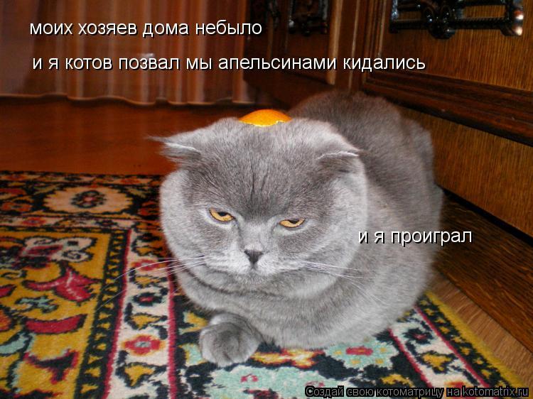 Котоматрица: моих хозяев дома небыло и я котов позвал мы апельсинами кидались и я проиграл
