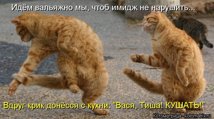 """Котоматрица: Вдруг крик донёсся с кухни: """"Вася, Тиша! КУШАТЬ!"""" Идём вальяжно мы, чтоб имидж не нарушить..."""