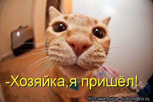 Котоматрица: -Хозяйка,я пришёл!