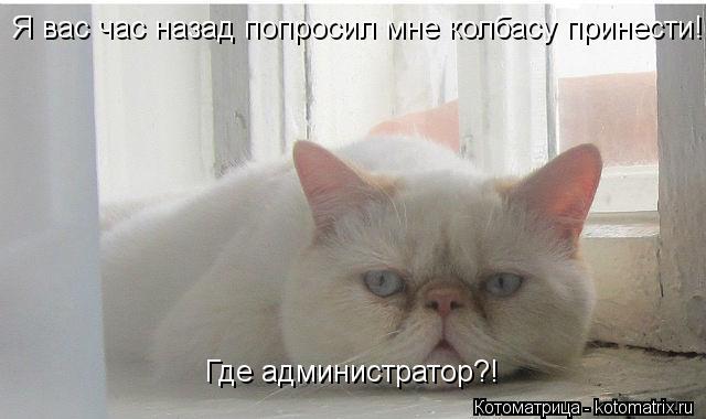 Котоматрица: Я вас час назад попросил мне колбасу принести!!! Где администратор?!