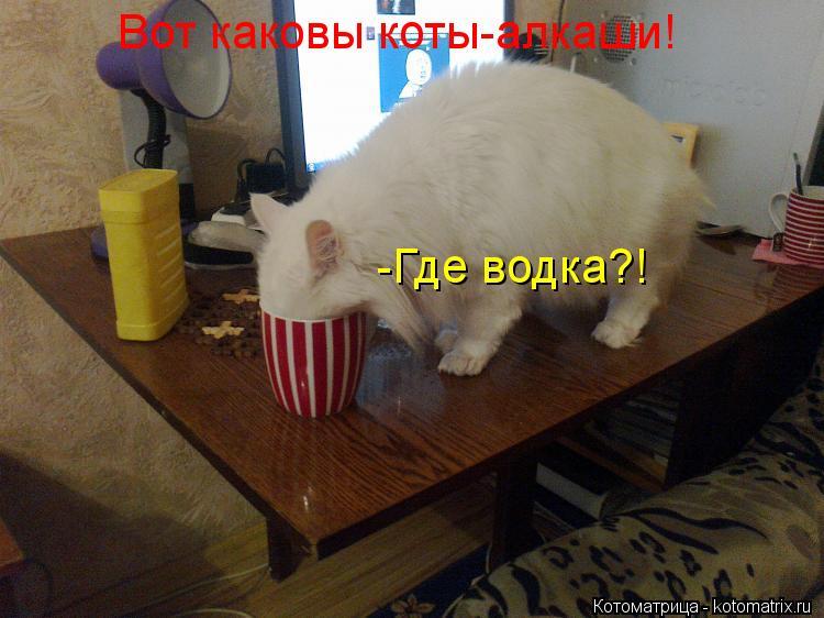 Котоматрица: Вот каковы коты-алкаши! -Где водка?!