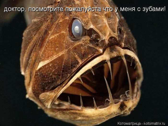Котоматрица: доктор, посмотрите пожалуйста что у меня с зубами!