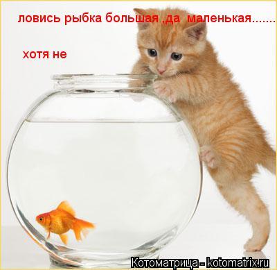 Котоматрица: ловись рыбка большая ,да  маленькая......... хотя не лучше только большая