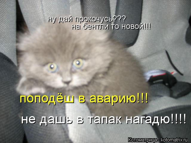 Котоматрица: ну дай прокочусь??? на бентли то новой!!! поподёш в аварию!!! не дашь в тапак нагадю!!!!