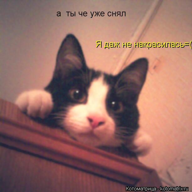 Котоматрица: а  ты че уже снял Я даж не накрасилась=(