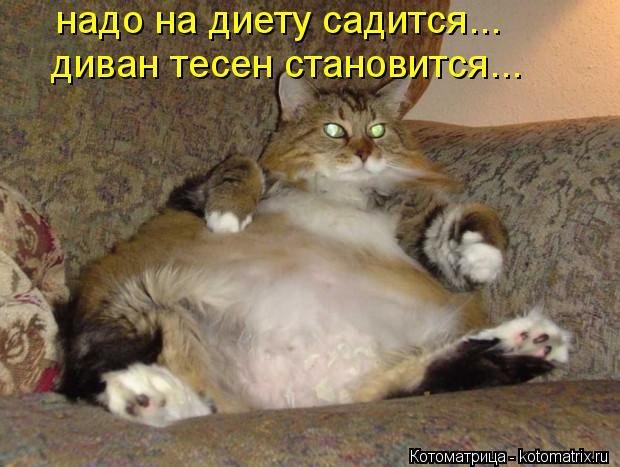 Котоматрица: надо на диету садится... диван тесен становится...