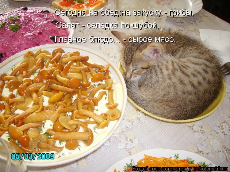 Котоматрица: Сегодня на обед:на закуску - грибы, Салат - селедка по шубой, Главное блюдо... - сырое мясо.