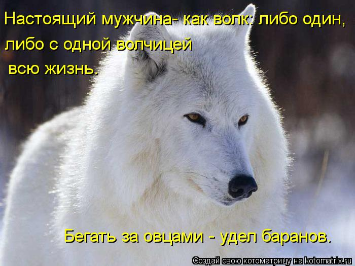 Котоматрица: Настоящий мужчина- как волк: либо один,  либо с одной волчицей всю жизнь. Бегать за овцами - удел баранов.